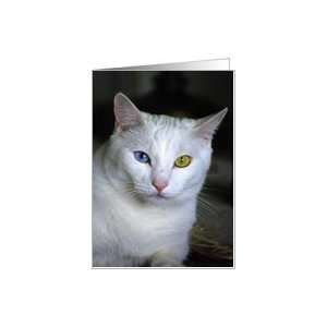 Turkish Angora Cat 2   blank inside Card Health