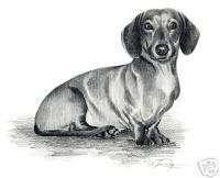 DACHSHUND Dog Drawing ART NOTE CARDS by Artist DJR