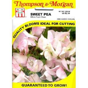 Thompson & Morgan 4355 Sweet Pea White Flush Rose Seed