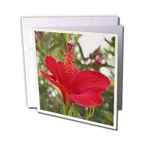 hibiscus, hibiscus rosa sinensis, plant, plants   Greeting Cards 12