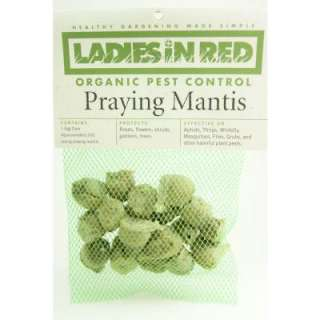 LADIES IN RED Twenty (20) Praying Mantis Egg Cases for Organic Control