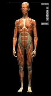 Die Premium Version enthält ein 3D Schichten Modell des menschlichen