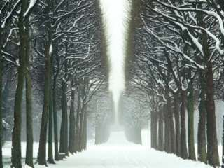 Snow on Tree Lined Avenue in Park, Misty View Parc De Sceaux, France