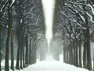 Snow on Tree Lined Avenue in Park, Misty View Parc De Sceaux, France
